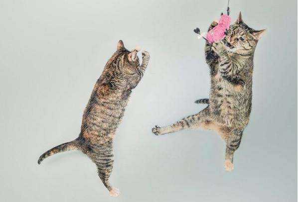 Các cách để huấn luyện chú mèo của bạn
